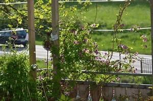 Rosen Für Balkon : rankhilfe f r rosen auf dem balkon seite 1 rund um die ~ Michelbontemps.com Haus und Dekorationen