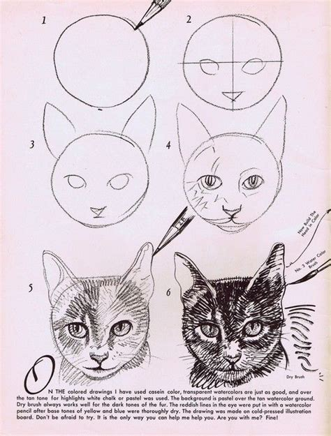 draw  cats face drawing animal drawings art