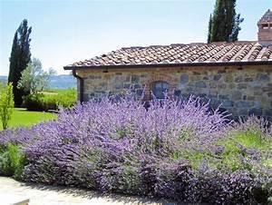 Pianta colorata e profumata: la Peroschia Ville&Casali