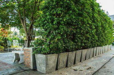 Sichtschutz Pflanzen Im Kübel by Sichtschutz Aus K 252 Beln 187 So Bauen Sie Eine Wand Aus Pflanzen