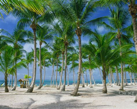 Palm Tree Coconut Tree Wallpapers Hd #1583 Hd Wallpapers