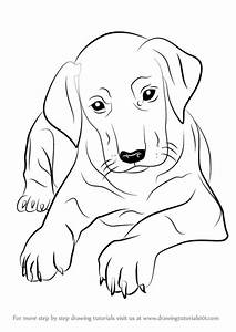 40 simple dog drawing to Follow and Practice