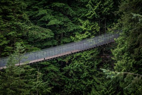 Is Visiting Capilano Suspension Bridge Worth It?