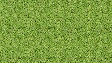 clover grass  royalty  texture