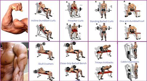bicep workout program  guarantee  biggest biceps