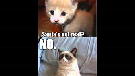 Cute Cat Meme Generator - grumpy cat part 2 best meme memes cute cats youtube