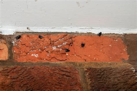 mum  fly infestation   smelly house   bad