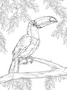 Dibujo de Tucán Toco para colorear Dibujos para colorear imprimir gratis