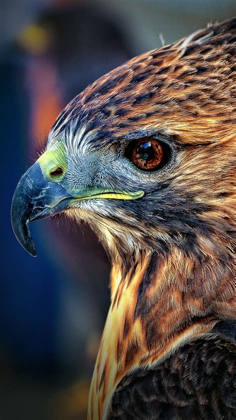 wallpaper eagle blur cute animals animals