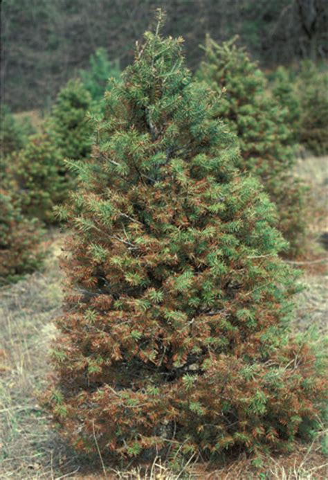 selected forest and shade tree diseases of significance in