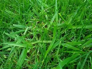 Quecke Im Rasen : unkraut im rasen was ist das ~ Lizthompson.info Haus und Dekorationen
