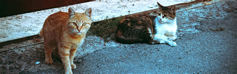 adopt barn cat georgian triangle humane society