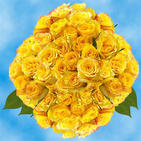 Globalrose Fresh Yellow Roses for Valentine's Day (100 ...