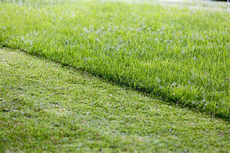 Wie Oft Rasen Lüften by Rasen Vertikutieren Wir Zeigen Wie Es Richtig Geht Plantura