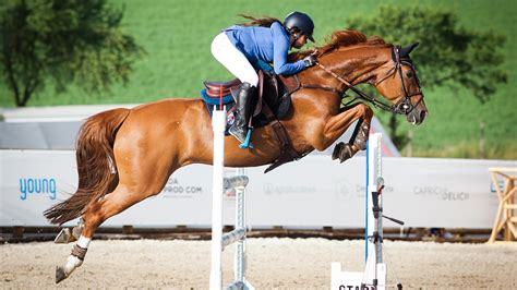 horse showjumper jumping jumps riders tips murders alamy monday thread open guide