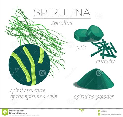 greens in powder form spirulina stock vector image 62086476