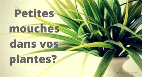 moucherons dans la cuisine mouchettes dans les plantes quoi faire 10 trucs