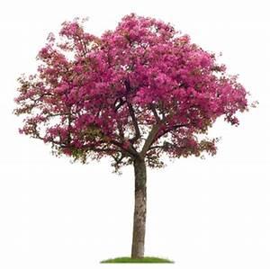 Rote Johannisbeeren Hochstamm Schneiden : ist der zierapfel essbar so pflanzen pflegen und ~ Lizthompson.info Haus und Dekorationen