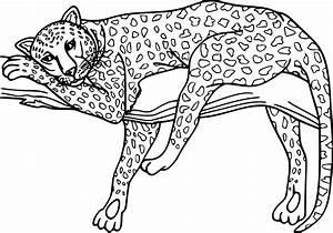 Dessin Jaguar Facile : dessin animaux tigre superbe photo coloriage guepard et dessin imprimer adult coloring pages ~ Maxctalentgroup.com Avis de Voitures