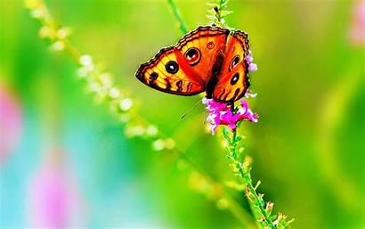 Butterfly Colorful Wallpapers Artistic Butterflies Bright Flower