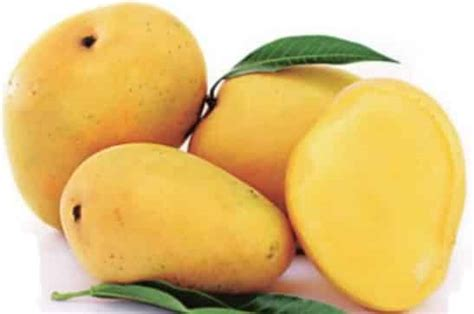 mango farming information guide asiafarmingcom