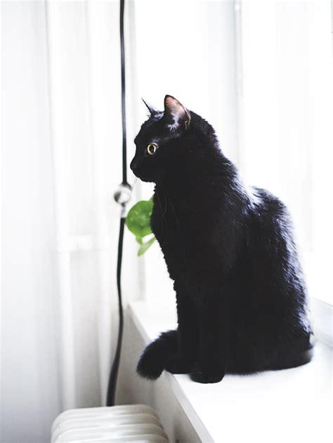 nox nachtschade  cat aesthetics  fancies cats