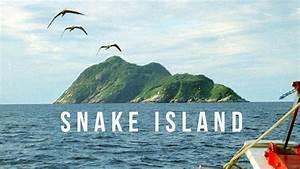 Snake Island | 100 Wonders | Atlas Obscura | Doovi