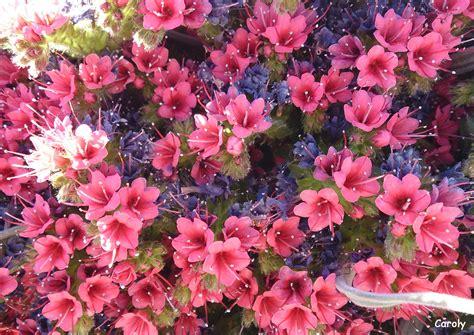 Más flores de nuestra eterna Primavera ; ) Cores Flores