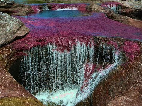 columbia colors cano cristales river colombia rainbow river images