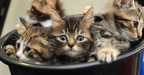 Rspca 'completely Overrun' With Abandoned Cats And Kittens