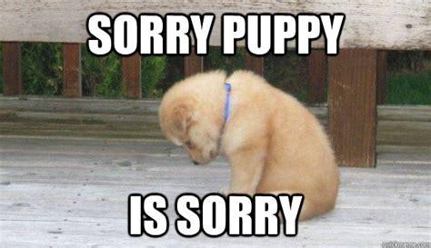Memes Sorry - sorry puppy is sorry sorry puppy quickmeme