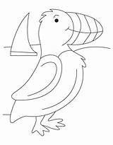 Puffin Coloring Pages Printable Template Seashore Sketch Atlantic Popular Bird Lbx Results Coloringhome Templates sketch template