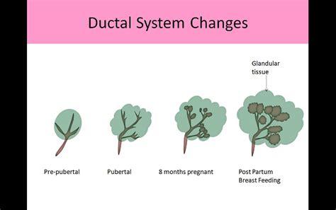 Breast Ultrasound Breast Ultrasound Registry Review