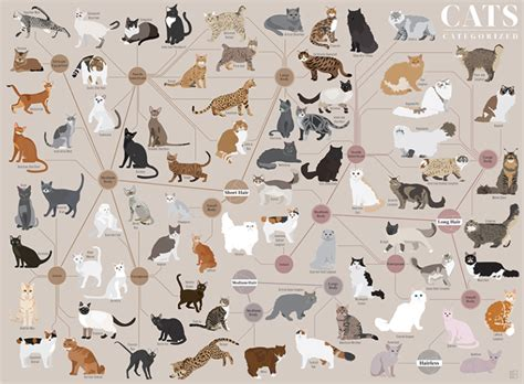 Cats Categorized, An Art Print That Organizes Felines By