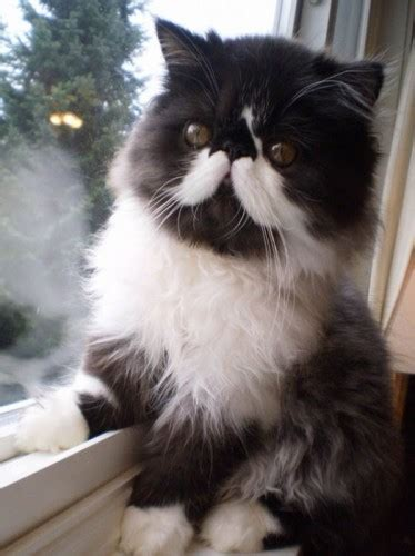 19 cat markings in photos happy nationalcatday
