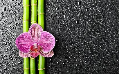 Orchid Wallpapers Flower Background Orchids Backgrounds Zen