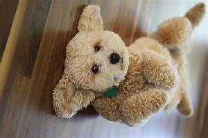 12 Puppy breeds that look like teddy bears Page 2 of 3 Yiral