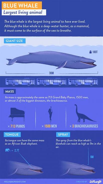 Whale Facts Amazing Earth Biggest Education Animal