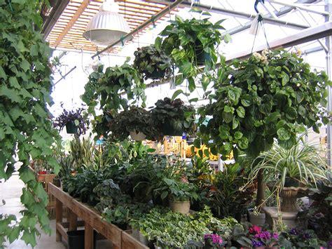 Indoor Plants  Sargent's Nursery