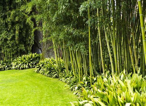Best Plants To Grow-bob Vila