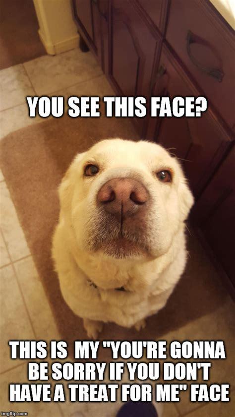 Cute Puppy Memes - cute dog imgflip