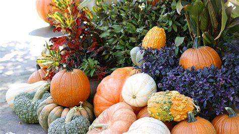 Pumpkin Patch Frisco Tx by Pumpkin Patch Arboretum Dallas Tx Blogsezy