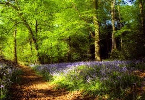 enchanted wood skinnyde flickr