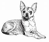 Coloring Pages Papillon Chihuahua Google Dogs Adult Dog Colouring sketch template