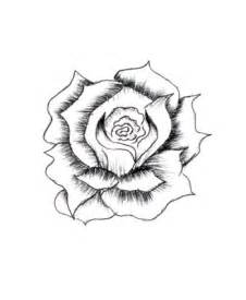 Drawing of Pencil Simple Rose Sketches