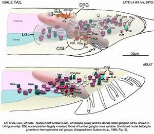 Individual Neurons
