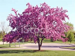 Rosa Blühender Baum Im Frühling : bl hender baum mit rosa bl tter stockfotos ~ Lizthompson.info Haus und Dekorationen