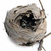them wasp nest by anna...