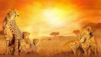 African Background Desktop Wallpapers Iphone Cats Laptop
