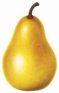 Pear Varieties (illustration) – California Pears  Pear